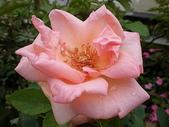 我的花園:23.JPG