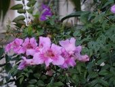 紫色花:2-1.JPG