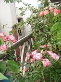 我的花園:DSC08174.jpg
