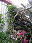 我的花園:zz2011-5-3 (25).JPG