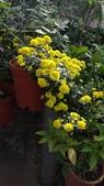 我的花園:zzDSC06710.JPG