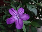 紫色花:13DSC01694.JPG