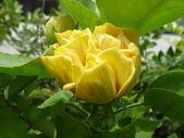 我的花園:96.8.25-1 032.jpg