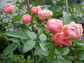 我的花園:96.8.24-1 016.jpg