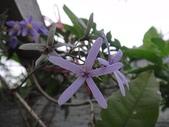 我的花園:zz2011-5-3 (17).JPG