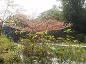 台南藝大:cc2011-1-14台南藝大 (35).JPG