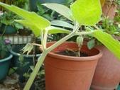 我的花園:aaDSC01790.JPG