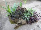 我的花園:AADSC05248.JPG