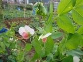 grace花菜園:ccDSC00281.JPG