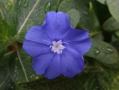 紫色花:15DSC02374.JPG