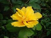 我的花園:bDSC05446
