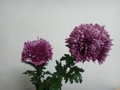 我的花園:4.JPG