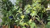 我的花園:aaDSC01265.JPG