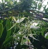 我的花園:47688174_2192642084101492_2591195211816239104_n.jpg