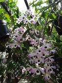 我的花園:zzDSC09268.JPG