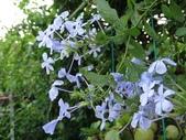 紫色花:16DSC03381.JPG