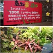 台北花卉村:8.jpg