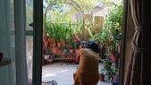 小花園裡蝴蝶好忙....:cccDSC_5775.JPG