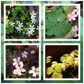 我的花園:3.jpg