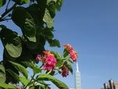 我的花園:20DSC02378.JPG