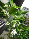 我的花園:24DSC08908.JPG