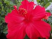 我的花園:zzDSC00008.JPG
