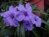 紫色花:6.JPG
