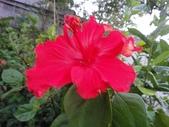 我的花園:zzDSC00007.JPG