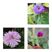 我的花園:7.jpg