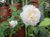 我的花園:zzDSC00573.JPG