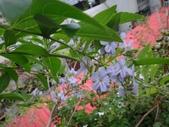 紫色花:10DSC06847.JPG