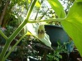 我的花園:aaDSC01789.JPG