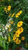 我的花園:zzDSC06809.JPG