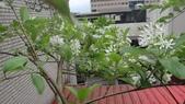 我的花園:zzDSC02326.JPG