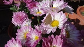 我的花園:zzDSC06708.JPG