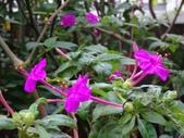 紫色花:5.JPG