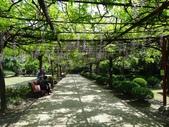 4/23紫藤園:ZZDSC04759.JPG