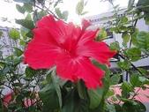 我的花園:zzDSC00001.JPG