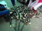 關西採竹筍:ZZDSC03328.JPG