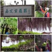 4/23紫藤園:4.jpg