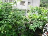 我的花園:25DSC00761.JPG