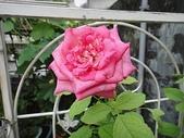 我的花園:zz1 (6).JPG