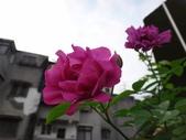 我的花園:zz16.JPG
