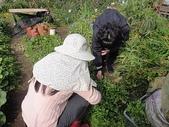 grace花菜園:ccDSC00190.JPG