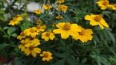 我的花園:zzDSC06805.JPG