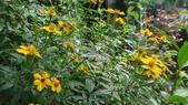我的花園:zzDSC06811.JPG