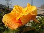 我的花園:bDSC09301