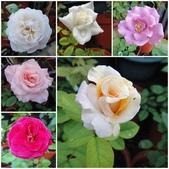 我的花園:aa2.jpg