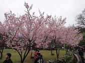 賞櫻:cc2011-3-4 (193).JPG
