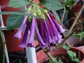 紫色花:4.JPG